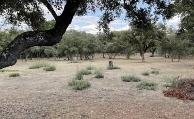 Sale Plot of land Boadilla del Monte