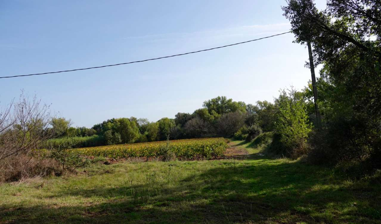 Vineyard property for sale Le Cannet-Des-Maures, Provence, France
