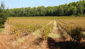 Sale Vineyard property Le Luc