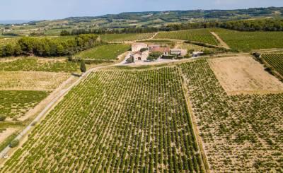 Sale Vineyard property RASTEAU