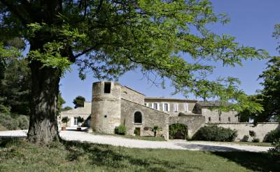 Sale Vineyard property TAVEL